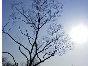 Baum mit kahlen Ästen im Sonnenschein